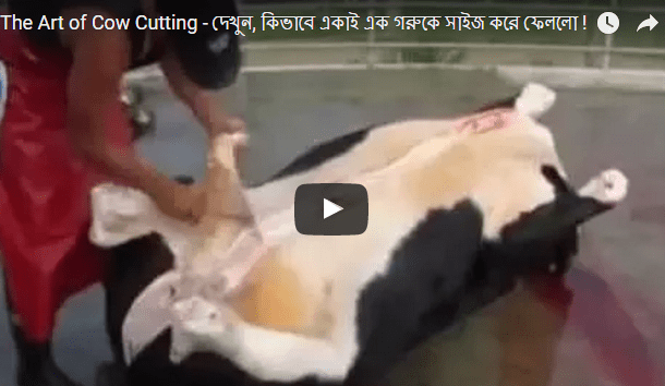 Cow Size within 15 Minutes by a Single Person! (See Video)