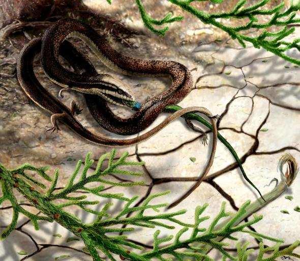 four-legged-snake